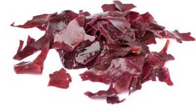 marine-algae-dulse